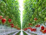 Martha Stewart-Backed, High-Tech Indoor Farm AppHarvest Starts Shipping Tomatoes